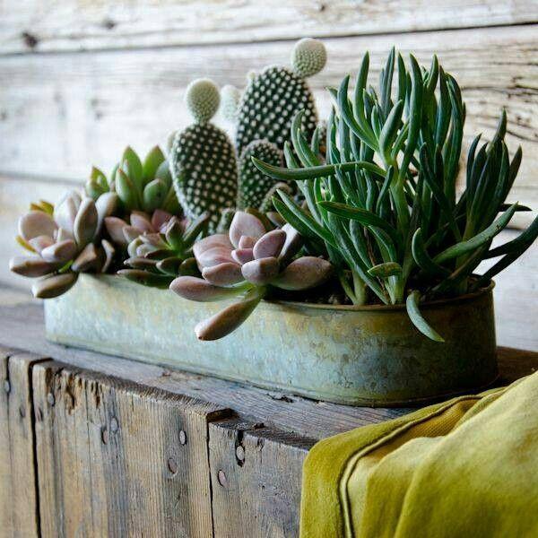 Interni d 39 autore arredamenti piante grasse - Vasi con piante grasse ...